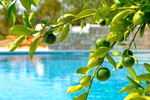 Bazén v ubytování Villa Lucija Bol nebo v jeho okolí