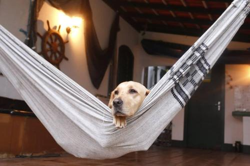 Pet or pets staying with guests at Hostel House 84
