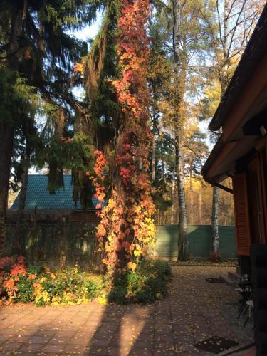 A garden outside Vacation home in Sosnovy bor