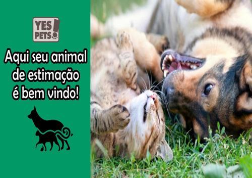 Pet or pets staying with guests at Casa em Cajazeiras com Garagem