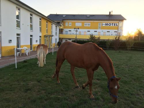 Tiere im Hotel oder in der Nähe