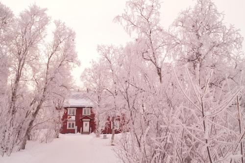 Abisko net Hostel & Huskies during the winter