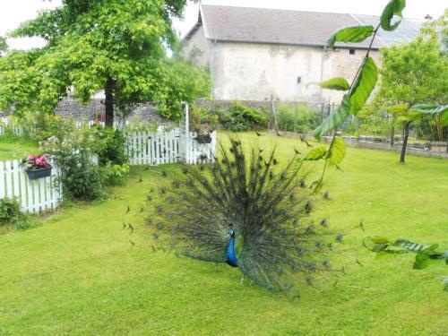 Jardin de l'établissement Gite du Domaine du Feyel