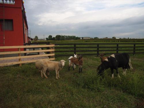Altri animali domestici presso the country house o nei dintorni