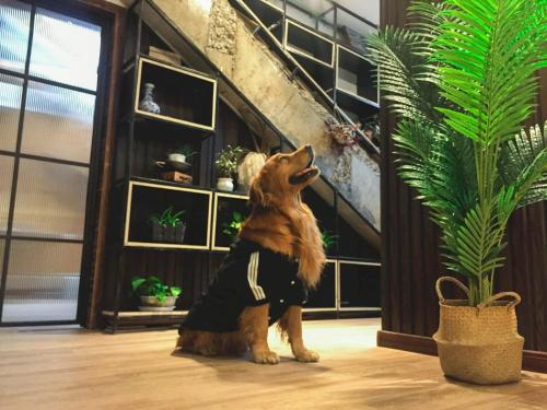 Pet or pets staying with guests at Jano's Backpackers Xi'an