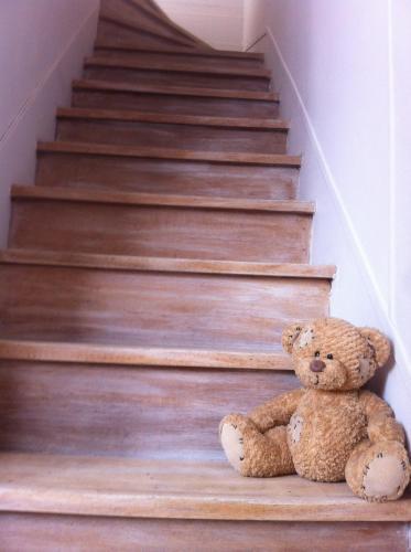 Animaux dans l'appartement ou à proximité