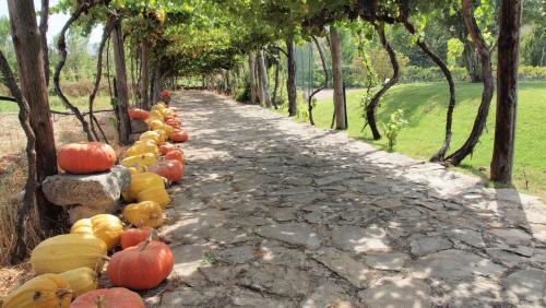A garden outside Casa dos Araújos