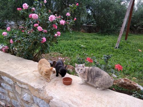 Κατοικίδιο ή κατοικίδια επισκεπτών που μένουν στο Pirgoi Edem
