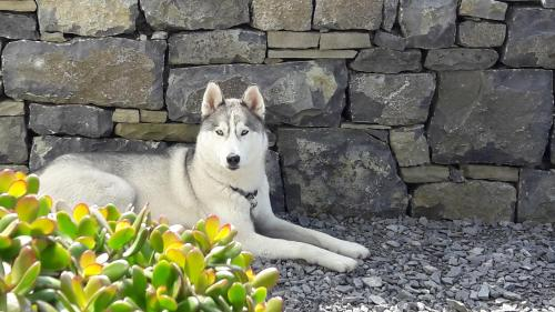 Pet or pets staying with guests at Cois Na hAbhann