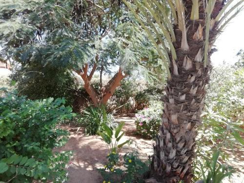 A garden outside Villa Pat & Diouma