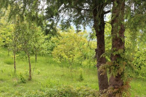 Natural landscape near the villa