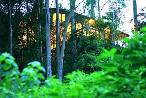 A garden outside Crystal Creek Rainforest Retreat