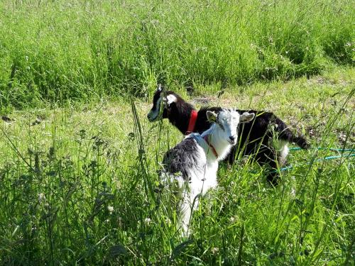Pet or pets staying with guests at Auberge du Lac de Mondon