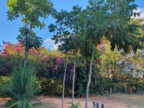 A garden outside Pousada do Rio Corrente