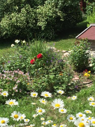 En trädgård utanför Olsbacka cottage
