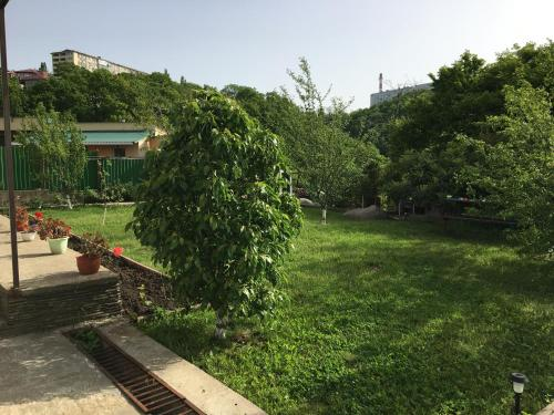 A garden outside Uiut Guest house