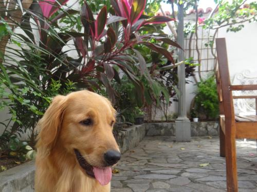 Pet or pets staying with guests at Hostel Casarão 65