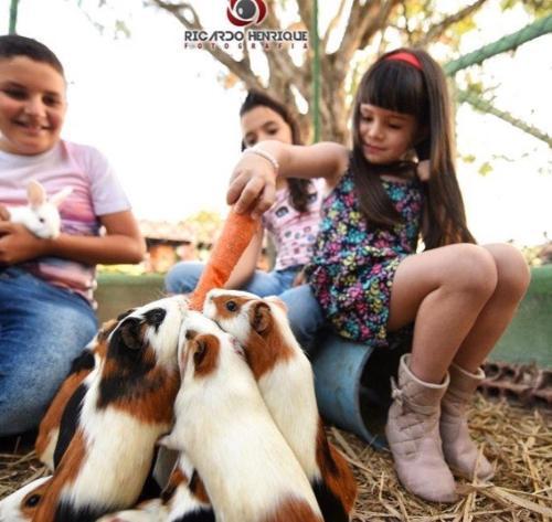 Crianças ficando em Pousada Fazenda Santa Fe