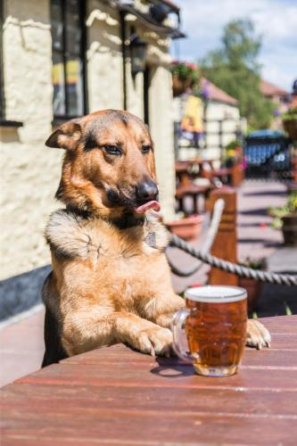 Pet or pets staying with guests at The Swan
