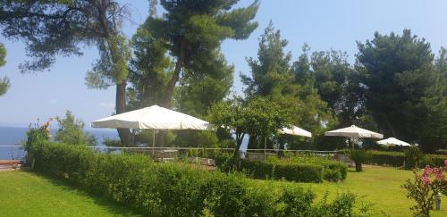 Κήπος έξω από το Angelikis House