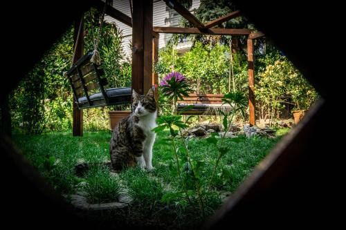 Pet or pets staying with guests at Guest House Aleksandra