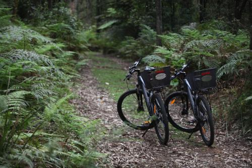 Cycling at or in the surroundings of Woodlands Rainforest Retreat