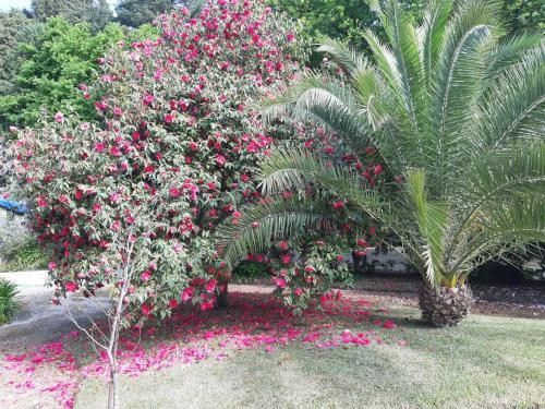 A garden outside Casa Da Espinhosa