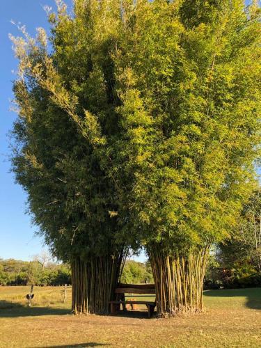 Pousada Canto do Bambuにある庭