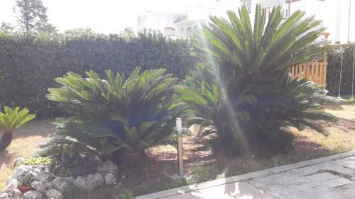 A garden outside Villa Del Mar