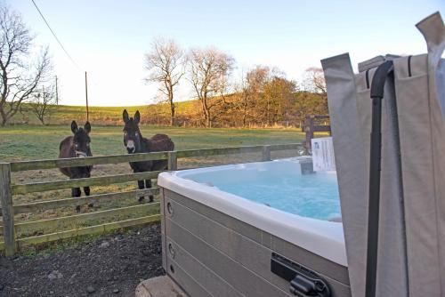 3 Bed Lodge w private Hot Tub on Animal Haven Farm