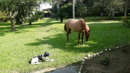 Pet ou pets ficando com hóspedes em Sitio Terravida