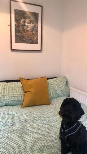 6 person Apartment near Parks, Chapter Arts & City Centre