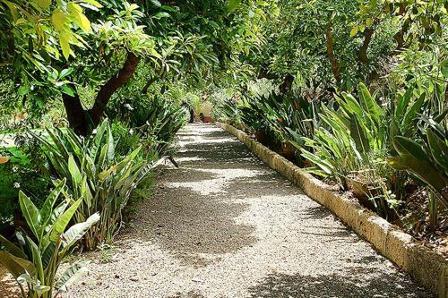 Jardín al aire libre en Nice house in Large Avocado Garden, Tenerife North