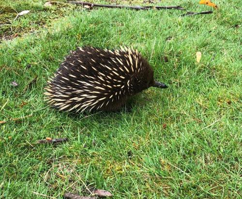 Animals at the holiday home or nearby