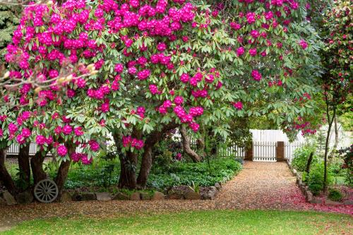 A garden outside Anabel's of Scottsdale