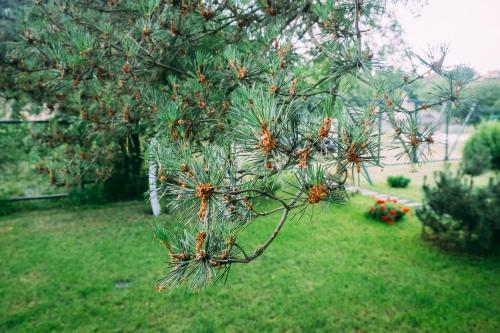A garden outside Ecolodge Zen