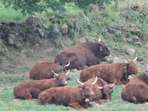 Animals at the inn or nearby