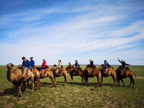 Horseback riding at the guest house or nearby