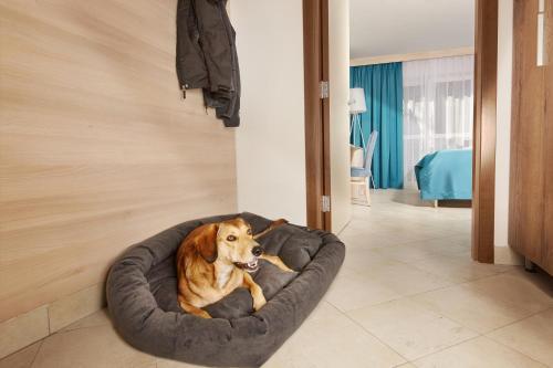 Hišni ljubljenčki, ki bivajo z gosti v nastanitvi Villa Bor - Hotel & Resort Adria Ankaran