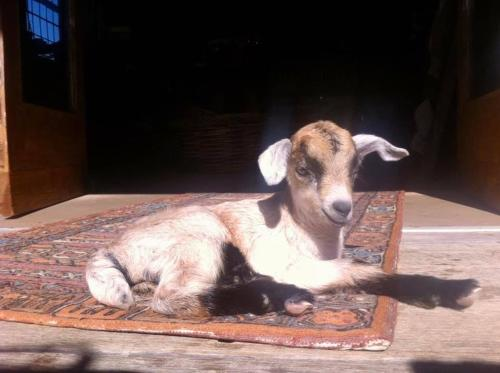 Pet or pets staying with guests at Carinya Homestead