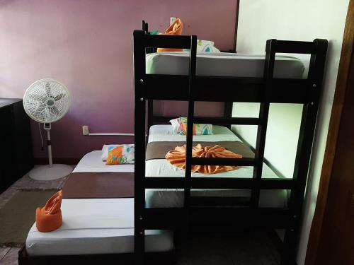 A bunk bed or bunk beds in a room at Aracari Garden Hostel