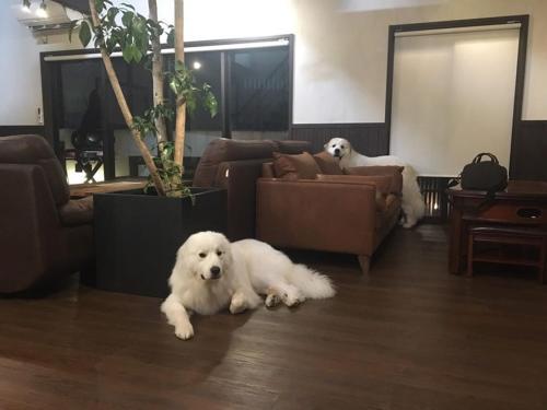 Pet or pets staying with guests at Miyajima Shiro