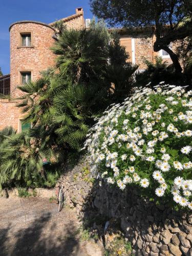 A garden outside Sa Plana Petit Hotel