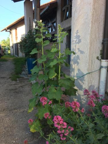 A garden outside Les Colombages