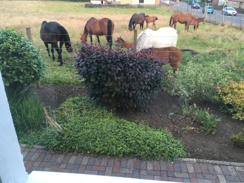Animals at the lodge or nearby