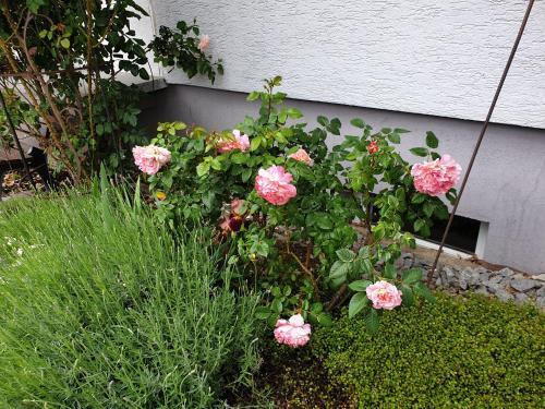 Ein Garten an der Unterkunft Pension Boitz