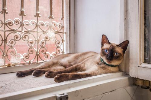Pet or pets staying with guests at Dar El Mudal