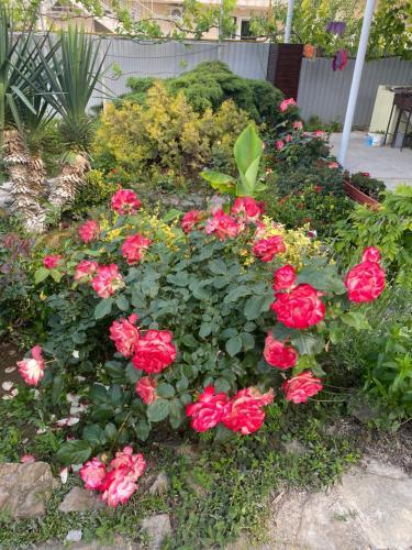Сад в Гостевой Дом Астерия