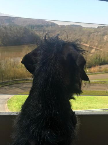Pet or pets staying with guests at Hotel Berghof