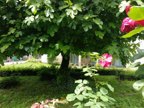 A garden outside Casa Ana Monteiro